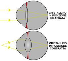 Fig.1. La capacità di modificare la curvatura del cristallino permette di spostare sulla retina il fuoco delle immagini provenienti dagli oggetti vicini