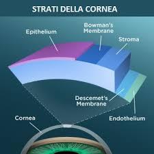 Fig. 1 strati di cui è costituita la cornea